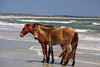 GA SAINT MARYS CUMBERLAND ISLAND NATIONAL SEASHORE SOUTHERN BEACH MARAB_MG_2777MM