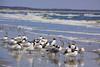 GA SAINT MARYS CUMBERLAND ISLAND NATIONAL SEASHORE SOUTHERN BEACH MARAB_MG_2884MM