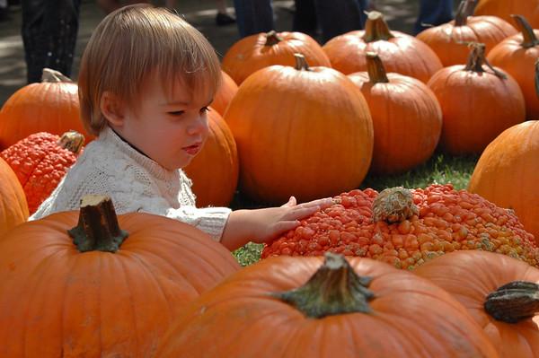 SUMC Pumpkin Patch