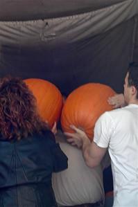 BIg Pumpkins - 1