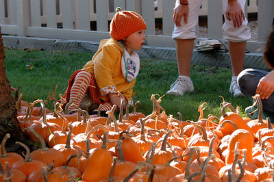 Pumpkin Patch Princess - 1