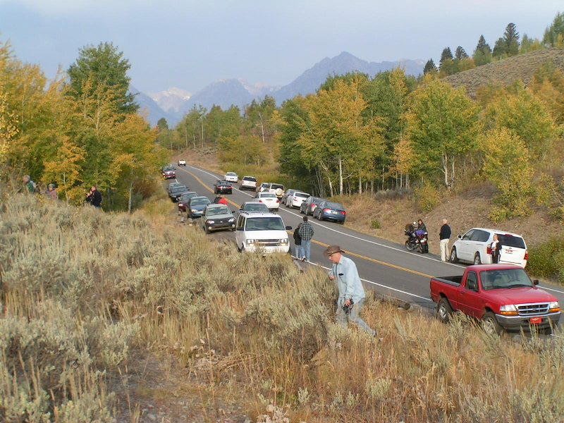 1.  September moose jam  between Jackson Lake Junction and the Oxbow Turnout.  You have to drive pretty carefully as you navigate thru the cars.  That's my little red truck near the camera.