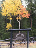 1. The Jenny Lake lodge is between Jackson Lake lodge and the town of Jackson. But it's nestled up against the base the mountains. It's upscale, in a very rustic way. I think the cabins go for about $500 a night. phew!!