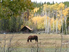 8. When you have horses, fall color and an old cabin, it's not too hard to frame a picture.