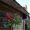 1. Lots of flowers around the lodge dining room and offices.<br /> <br /> NOTE: you are welcome to download any of these pictures to your computer with a right click of your mouse. They will be a small file size. You can email me and I will send you the original file size pic.    ronpyron@charter.net<br /> <br /> Click on any picture to enlarge it.