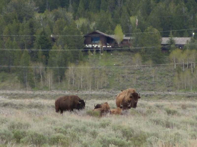 1. Heading to church on Sunday morning, Pam and I ran into a few bison out in front of the ranch. That's the ranch lodge in the background on the bluff.