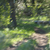 14. There was a gray wolf trotting down this trail towards us on the ride this morning. He took one look at us and skedaddled. I pulled out my camera and got this great unfocused picture of where he had been standing. (Wolves are harder to shoot than buffalo.)