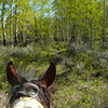 17. My view from my trusty horse Wardance.