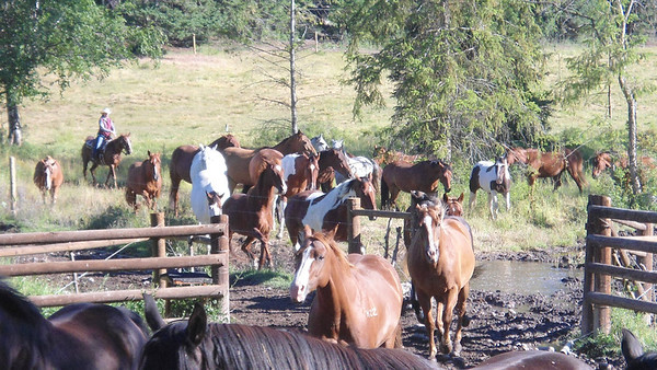 Around the corral, late July