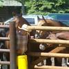 6. Wrangler Wilson holds the horses at bay til he gets the word...