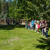 5. Then the students, K-6th grade, help the wranglers move the horses from the catch-pen to another pasture.