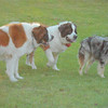 4. The ranch dogs pay no attention to Jason, sorta like the wranglers...