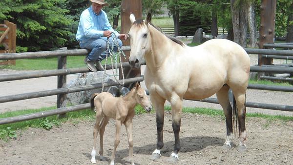 Sage has her baby  June 29