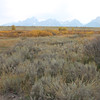 3. Now the area is generally  covered with willow, sagebrush and weeds.