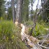 15. Saw some beaver activity, but no beaver.