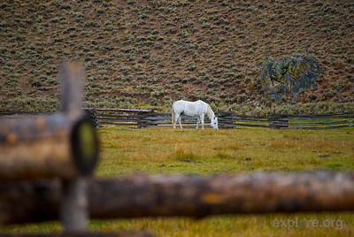 A horse grazes outside Sun Valley, Idaho.