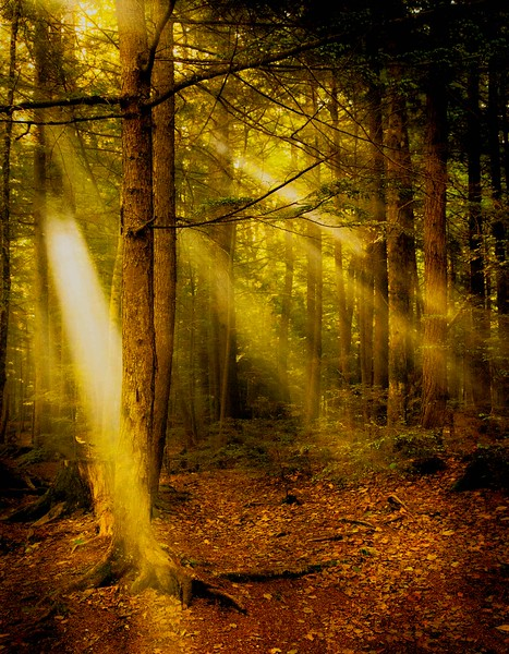 Forest sun rays