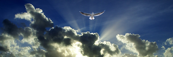 Heavenly Seagull.