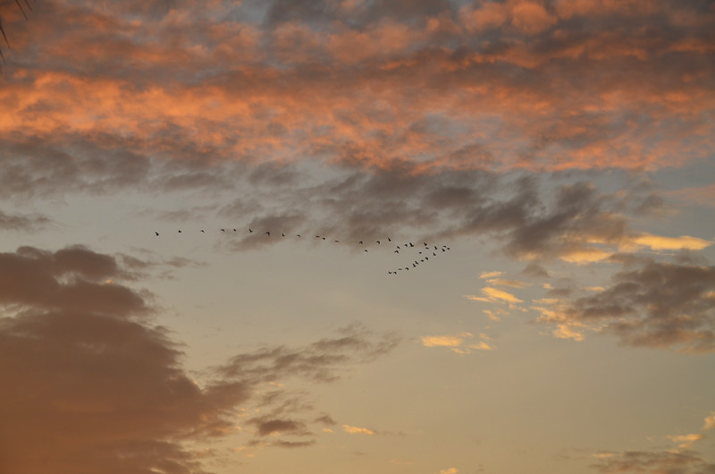 Tropical sunrise cloudscape with birds in flight at Huay Yang beach resort, Thailand.