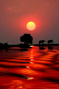 SUNSET - CHOBE RIVER