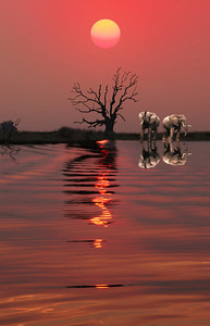 CHOBE NATIONAL PARK - BOTSWANA