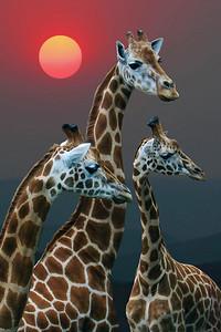 SAMBURU NATIONAL PARK - KENYA