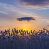 sunset  sm    1