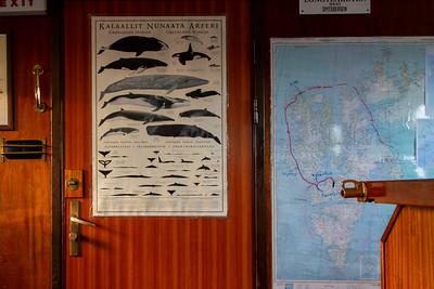 024 Whale chart © David Bickerstaff