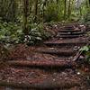 La Soufriere Trail.