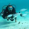 Tobago Cays Marine Park.
