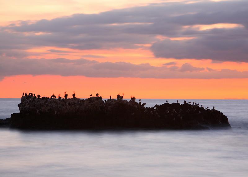Laguna Beach - Birds On A Cloud