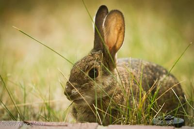 Rabbit's LunchSeptember  2010 Challenge, Down LowTyree Phillips