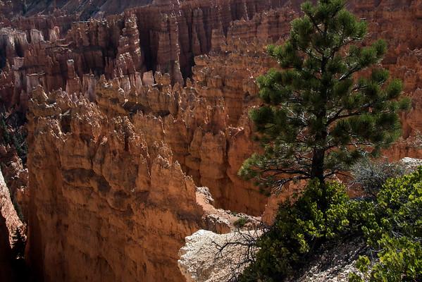Bryce Canyon-1899