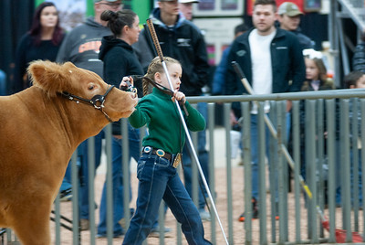 2020_sw_cattle016