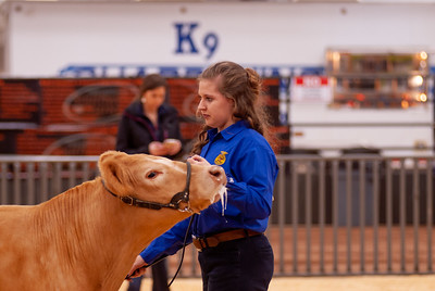2020_sw_cattle022
