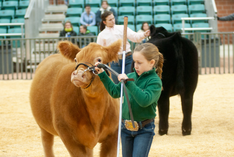 2020_sw_cattle026