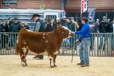 2020_sw_cattle019