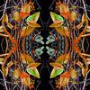 PICKEREL WEED DRAGONFLIES