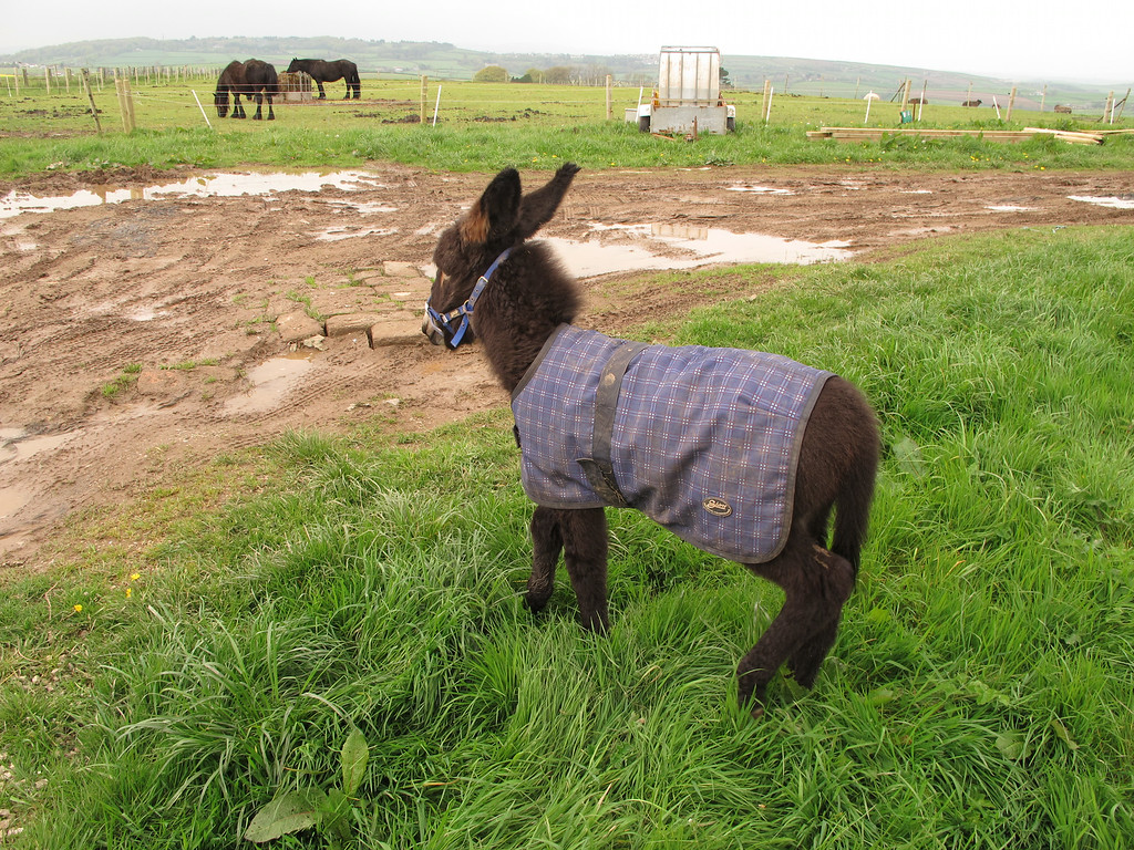 This charming little baby donkey was so excited to see a visitor that it ran round with great excitement occasionally jumping into the air.