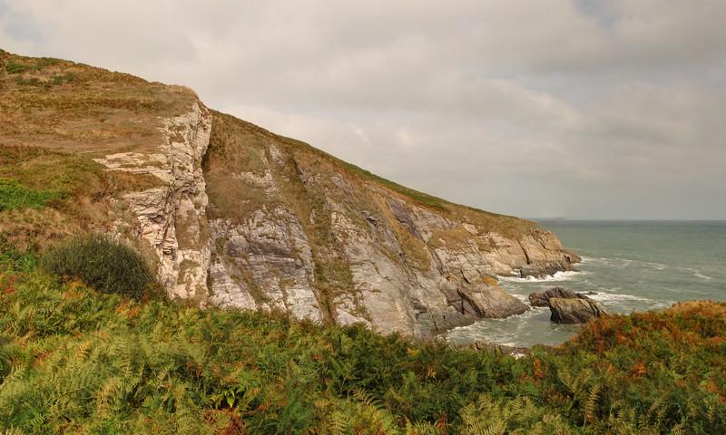 Ivy Cove.