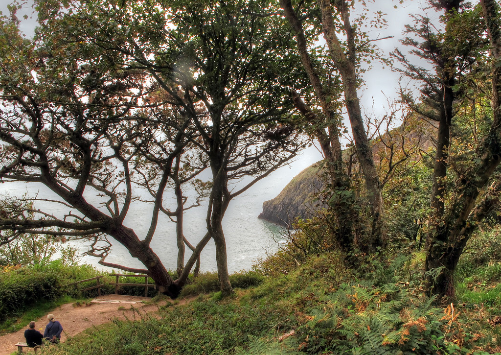 Pudcombe Cove from Coleton Fishacre.