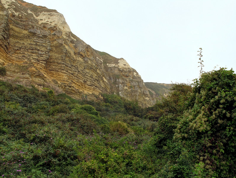 The Hooken Landslip walk.<br /> Early in 1789 a wide chasm appeared in the cliff top and in March of that year a vast landslip occurred where a large section of cliff slid forward and down to form this section of land.   Over the years it has become populated by unusual plants and is a haven for naturalists.