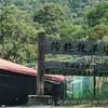 Saanen-Dairy-Goat-Farm