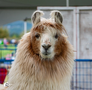 Fun at the Fair | Saanich Fair | Saanichton BC