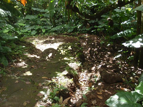 Vegetation around trail