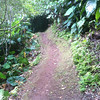 Trail path