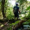 Vegetation around trail path