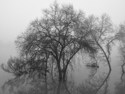 sac river fog picts 1-14-2017