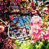 46-Blooming Flower