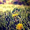 50-Yellow Flower